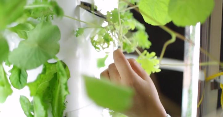 Harvesting Good Food Machine